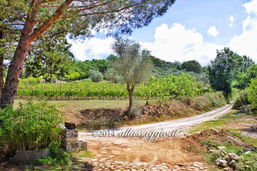 Azienda Agricola Casebianche