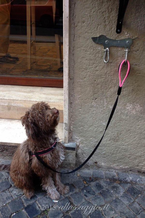 Lilli waiting